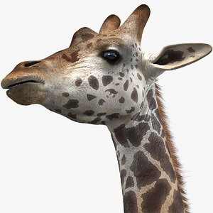 3D realistic giraffe 2