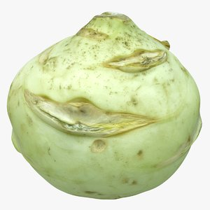 realistic cabbage 3D model