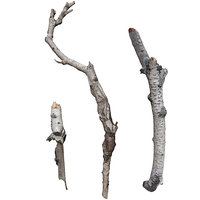 branches scan 3D