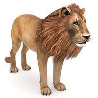 Lion-2 Low Poly