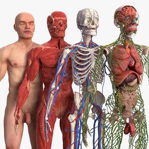 3D male body anatomy skin