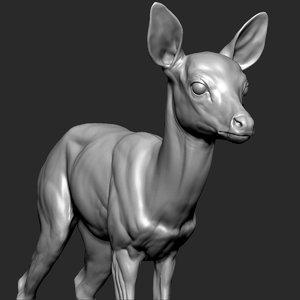 3D fawn deer medium model