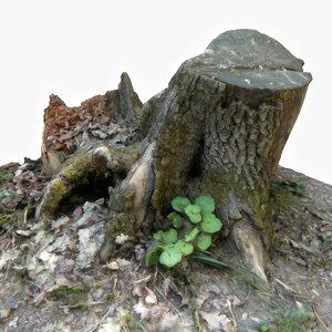 3D old rotten stump