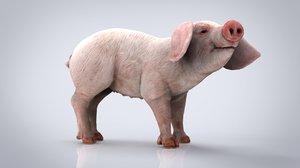 animal pig mammal 3D model