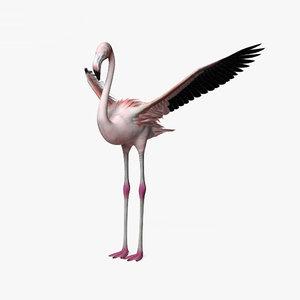 flamingo bird animal 3D model