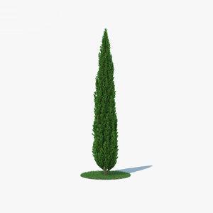 cypress conifer tree model