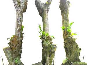 3D old jungle tree model