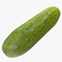cucumber 05 3D model