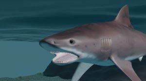 3D shark tigershark