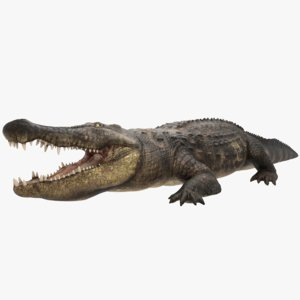 3D realistic crocodile model: rigged