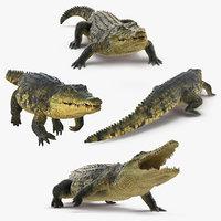 crocodile animals 3D model