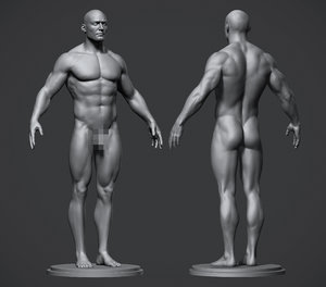 3D male body modeled model