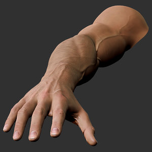 3D realistic male arm hand model