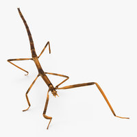 3D stick insect brown walking model