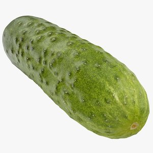 3D model cucumber 08 hi polys