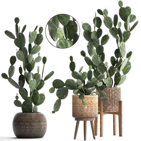 plants exotic cactus 3D model