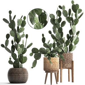 plants exotic cactus 3D model