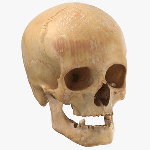 3D human female skull damaged