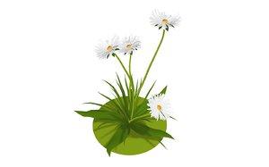 3D model flora nature chamomile