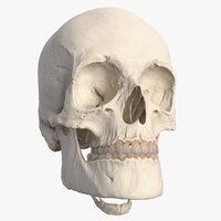 human head bones 3D