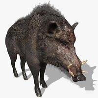 3D wild boar animal