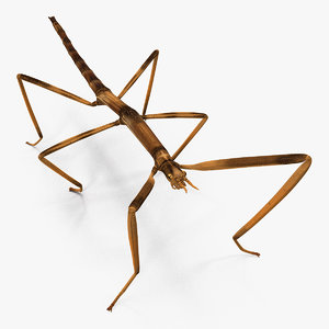 stick insect brown model