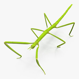 stick insect green 3D model