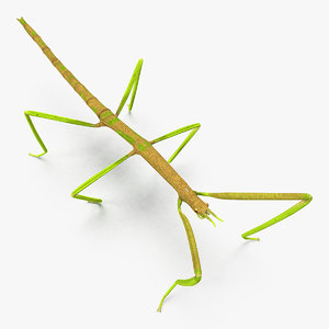 phasmatodea stick insect 3D model
