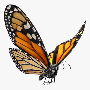 flight monarch butterfly fur 3D model