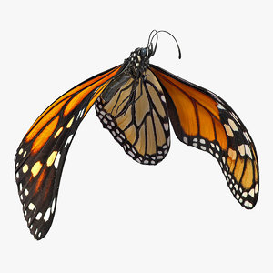3D flight monarch butterfly flying