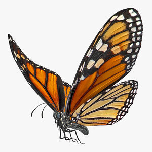 3D flying monarch butterfly rigged model