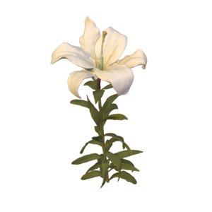 photogrammetry lilium flower white 3D model
