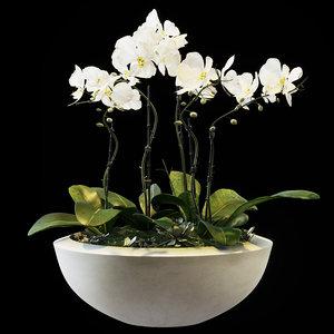 flowers orchid set 05 3D