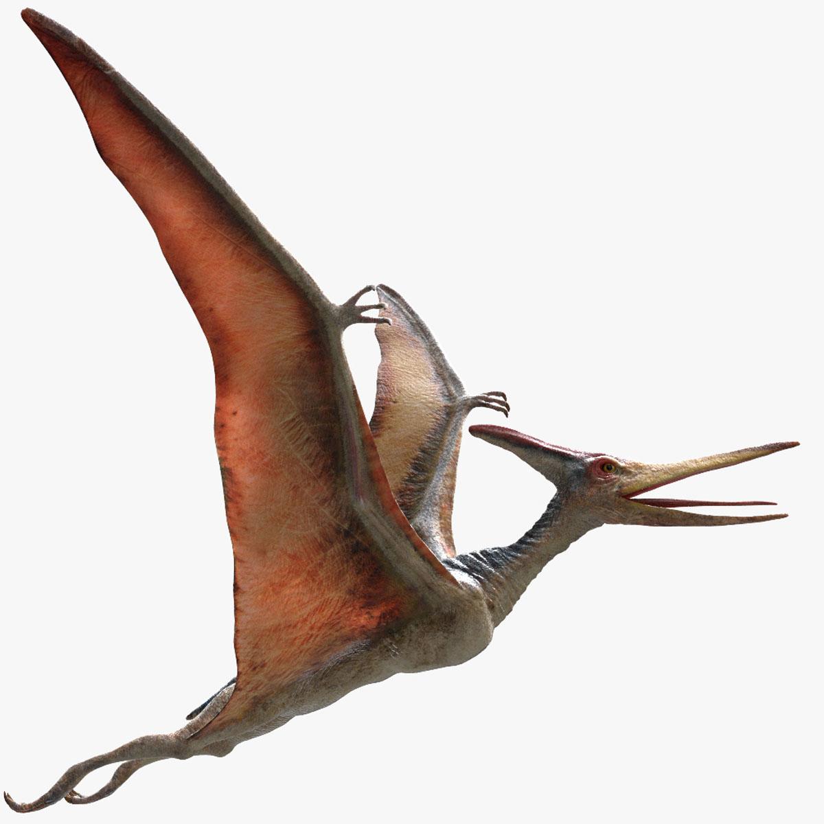 pteranodon rigged obj
