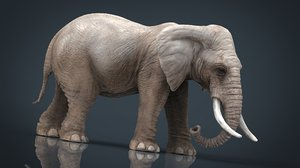 3D model elephant animal zoo
