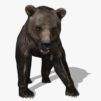 3D grizzly bear animal