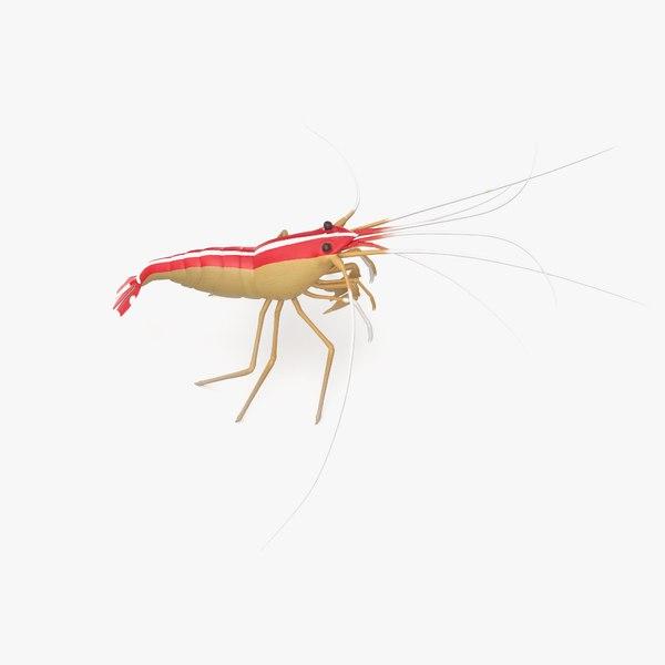 scarlet cleaner shrimp 3D