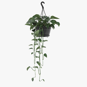 golden pothos plant hanging 3D model
