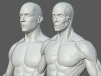 Character - Male Anatomy Body Base HighPoly