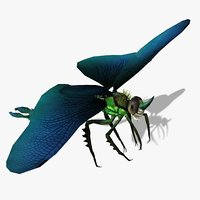 3D dragonfly animations flying