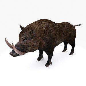 3D boar type 01 model