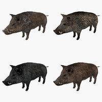 boar type 02 3D model