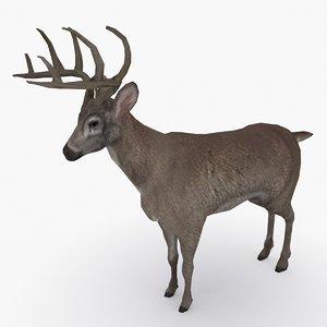 3D deer type 03 model
