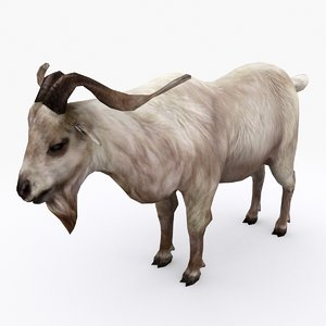 3D goat type 02