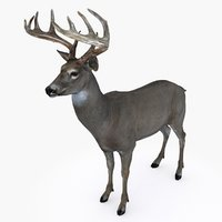 Deer type 05