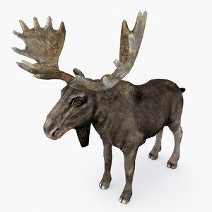 moose type 02 3D model