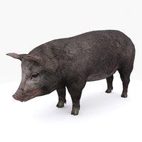pig type 01 3D