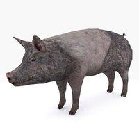 3D pig type 03 c model