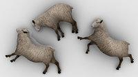sheep dead 3D