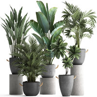 Collection of Exotic Plants 402